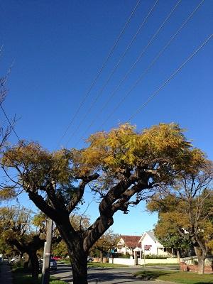 Perth Morning